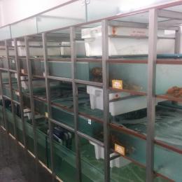Aquariums in glass